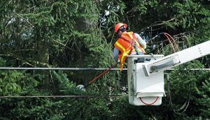 Man cutting tree branches away from power lines