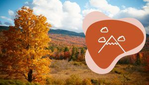 """A tree with bright foliage stands near the foot of a mountain on an autumn day, with the """"Play"""" icon in the bottom right"""
